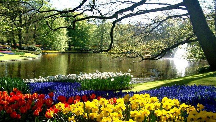 Keukenhof Gardens and Tulip Parade