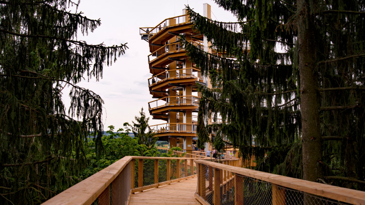 Saar Bend Treetop Walk and Mettlach